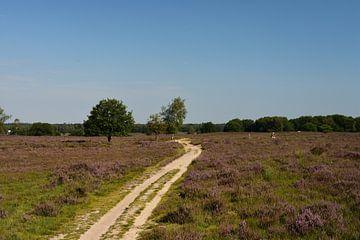 Een pad over de Ermelosche heide van Gerard de Zwaan