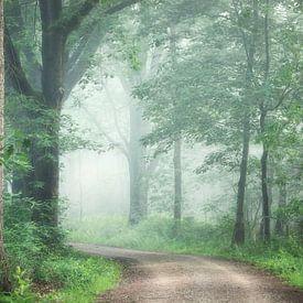 Misty mornings van Roelie Steinmann