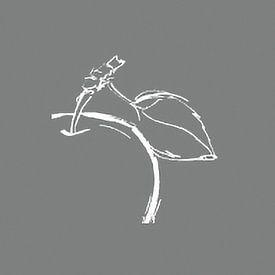 Wild Apple avatar