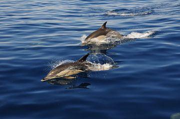Delfins near Malaga van Fred Repko