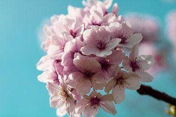 Blüte Blume von Sharona de Wolf