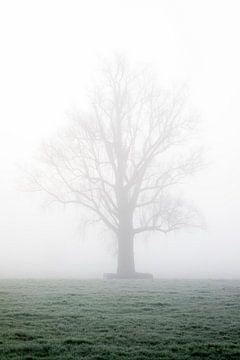 Silhouet van een kale boom in de mist met bevroren grond van Leoniek van der Vliet