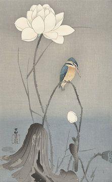 IJsvogel zittend op gebogen stengel bij witte lotusbloem van Ohara Koson