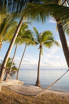 Palmbomen met hangmat