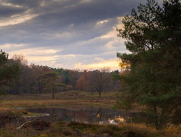 Herbstlicht von Wendy Drent