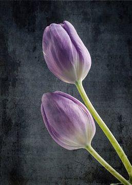 Tulpenpaar von Andreas Berheide Photography
