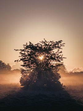 Nebliger Sonnenaufgang in der Form eines Herzens von Iris Rozema