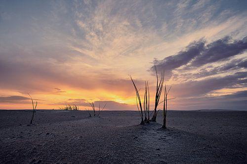 Helmgras op strand Schiermonnikoog van