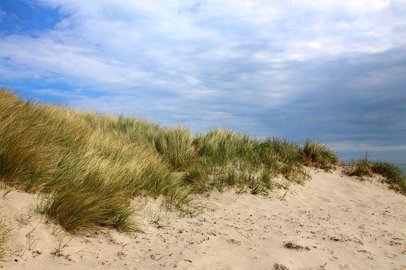 Dünenlandschaft von Ostsee Bilder