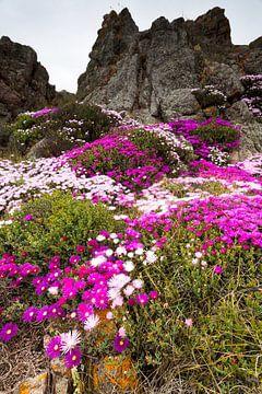 Bloemenpracht op de rotsen