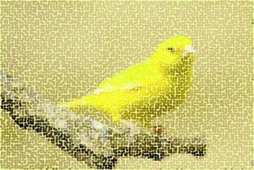 Vogels 6