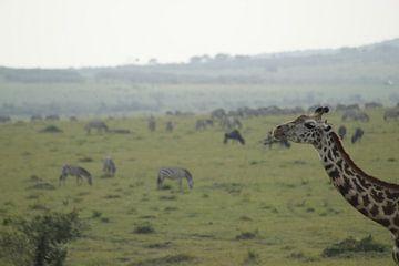 giraf van Laurence Van Hoeck
