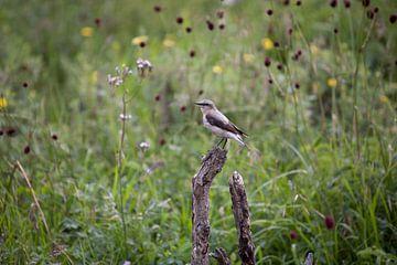 Vogel von Anne-Marie Vermaat