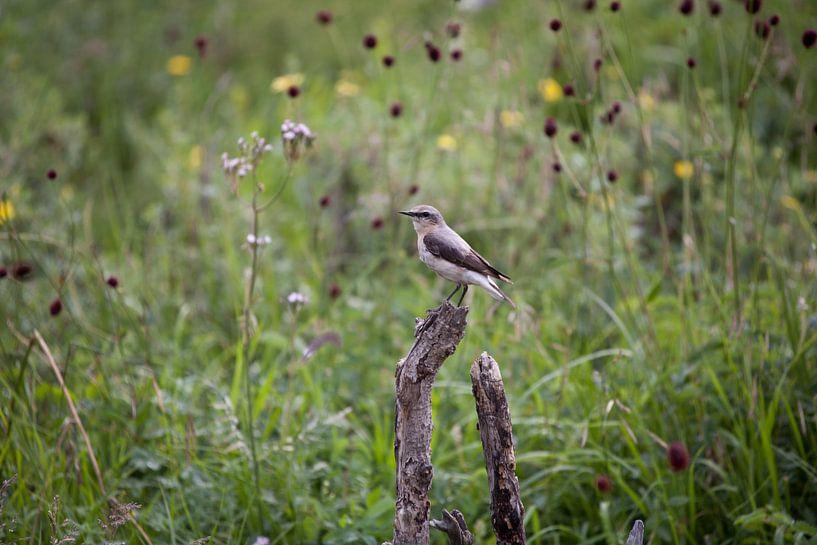 vogel van Anne-Marie Vermaat