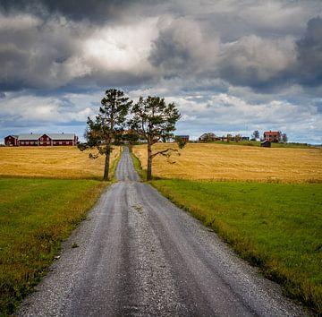 Bomen in de Zweedse herfst van Hamperium Photography