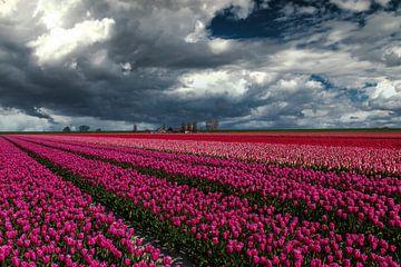 Hollandse luchten boven tulpenveld van Ilya Korzelius