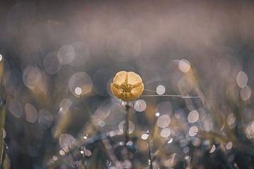 bloemen part 36 van Tania Perneel