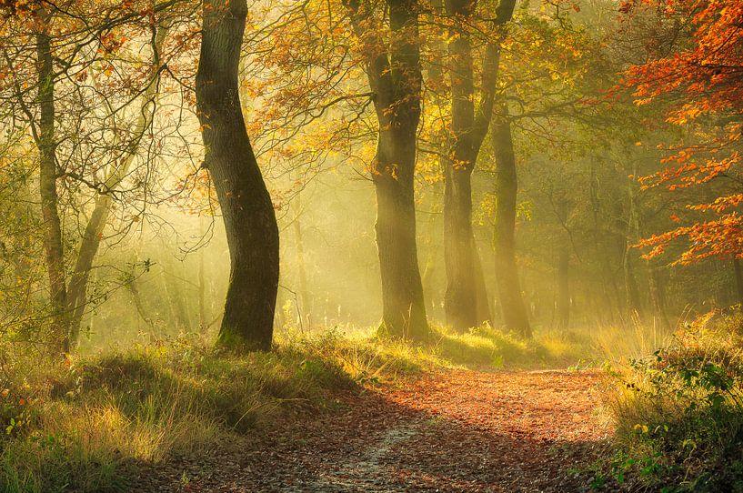 Herfstbos in de mist van Peter Bolman
