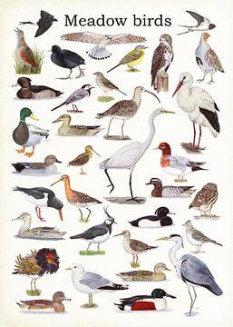 Meadow birds van Jasper de Ruiter