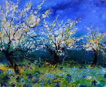 Orchard in spring sur pol ledent