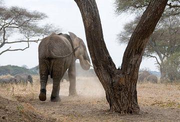 Olifant bij boom van Herman van Ommen