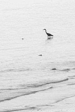 Kraanvogel in de zee.  van