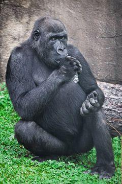 Gorilla mit Plastikflasche als Symbol für Afrikas Plastikverschmutzung