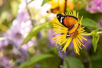 Kleine monarchvlinder op een gele bloem von Marijke van Eijkeren