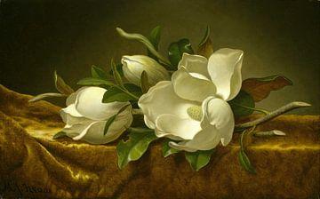 Magnolias sur toile de velours or, Martin Johnson Heade