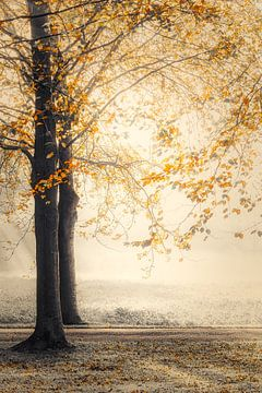 Herbstmorgen von Rik Verslype