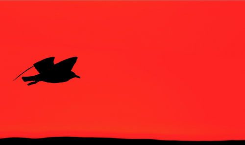 In vogelvlucht van