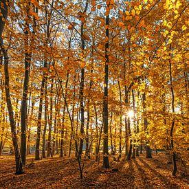 Herfst op Texel /  Autumn on Texel. von Justin Sinner Pictures ( Fotograaf op Texel)