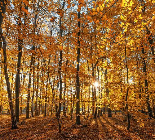 Herfst op Texel /  Autumn on Texel. van