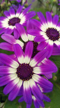 Mooie paarse bloemen von Shan Shop