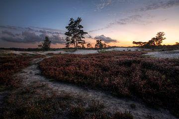 Bomen en duinen IV von Mark Leeman