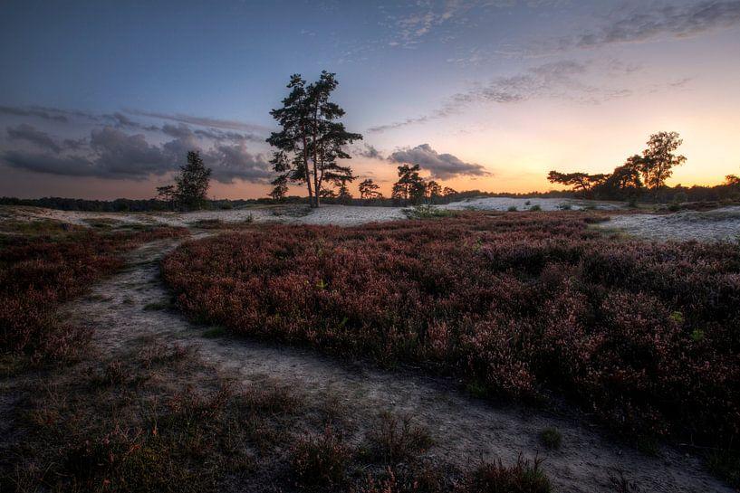 Bomen en duinen IV van Mark Leeman