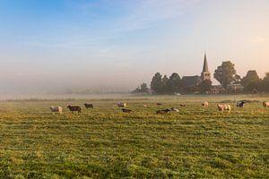 Hollands nevelig landschap met grazende schapen met op de achtergrond de stad IJlst in Friesland. Wo