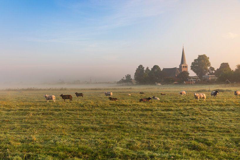 Hollands nevelig landschap met grazende schapen met op de achtergrond de stad IJlst in Friesland. Wo van Wout Kok