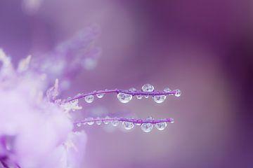 Abstraktes Makro Foto einer Blüte mit Tautropfen von ManfredFotos