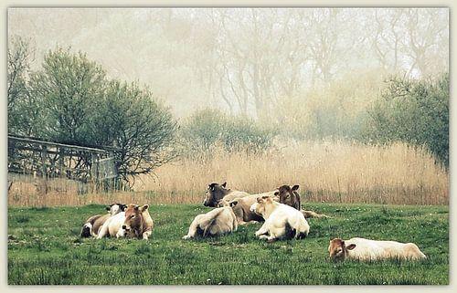 Hollands tafereeltje ... Landschap
