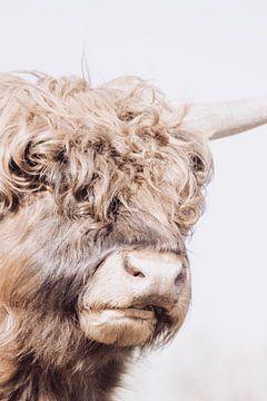 Schitterende Schotse Hooglanders van Mascha Looije