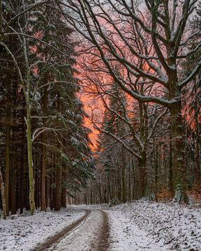 Zonsondergang bij de Redwood Trail van Uwe Ulrich Grün