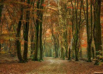 walking path van Elly Besselink