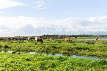 Nederlands landschap met koeien van Madelief Dekker