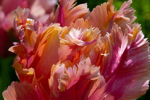 Pastelkleurige tulpen van Mariëlle Verhoef