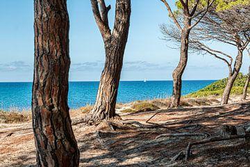 Pine Beach van Thomas Heitz