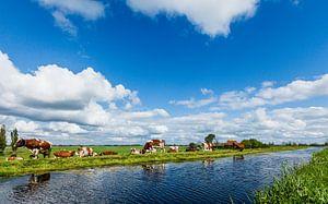 Weidelandschap met roodbonte koeien bij Zevenhoven, Zuid Holland