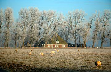 Nederlands landschap met boerderij van Cora Unk