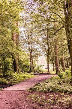 Lage Bergse Bos - Waldweg Nr. 1 von Deborah de Meijer