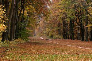 Herbstfarben auf der Veluwe von Cilia Brandts